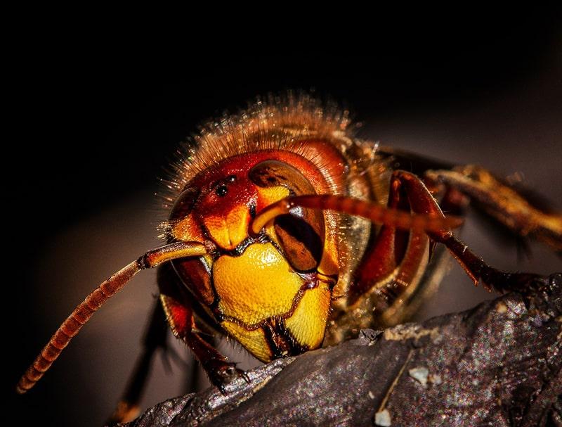 Użądlenie przez owada: jak wyglądają objawy i jak należy postępować?