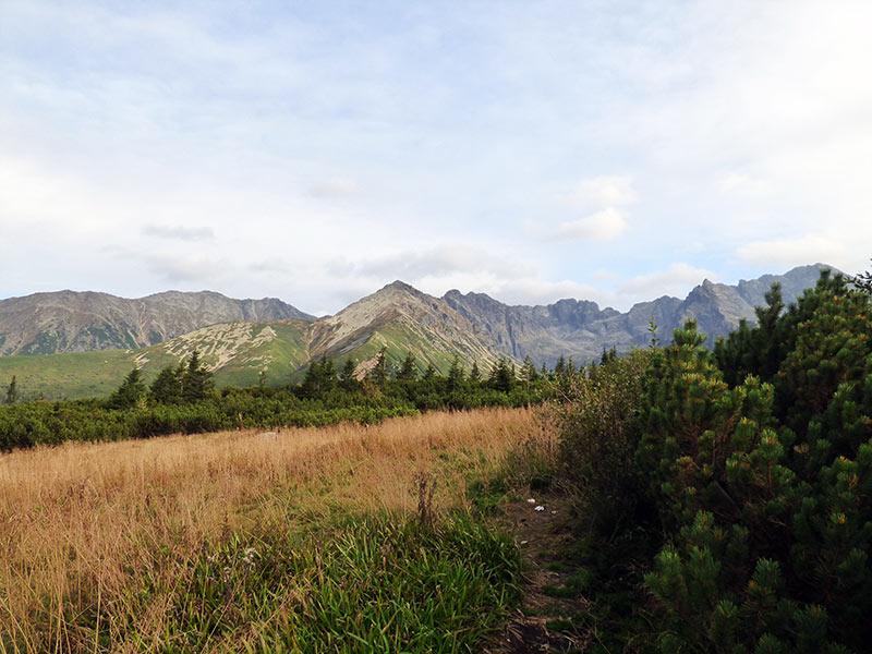 Piętra roślinne w górach - poznaj rośliny górskie