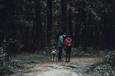 Dogtrekking – dla miłośników psów i aktywności na świeżym powietrzu