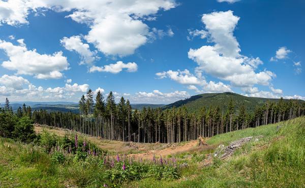 Góry Bardzkie – szlaki oraz trasy turystyczne. Najważniejsze informacje o tym paśmie gór w Sudetach Środkowych