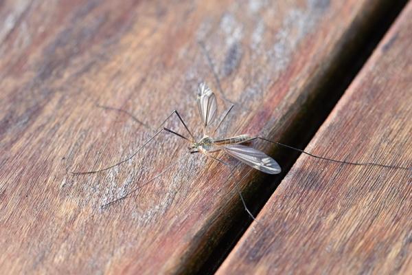 Sposoby na komary: sprawdź, jak je skutecznie odstraszać