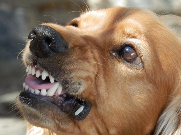 Ugryzienie przez psa: jak postępować w takiej sytuacji?