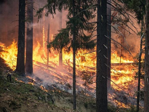 Zagrożenie pożarowe w lasach – jak reagować?