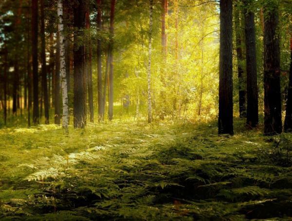 Shinrin Yoku – czym są terapeutyczne kąpiele leśne? Jak japońska sztuka czerpania mocy z przyrody może Ci pomóc?