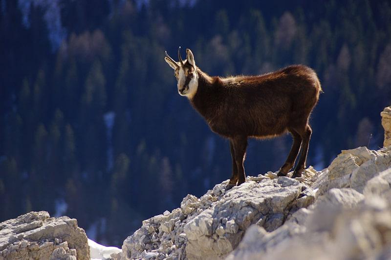 Zwierzęta w górach: czy znasz zwierzęta Tatrzańskiego Parku Narodowego?