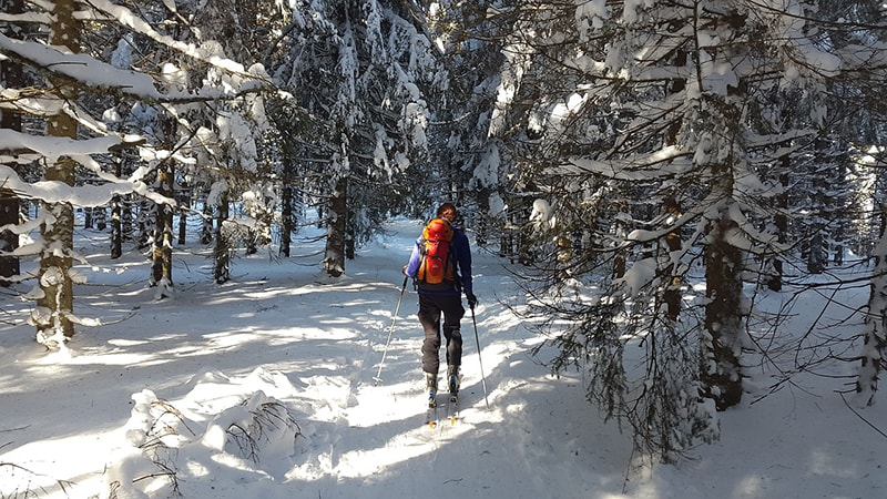 Skitour w lesie