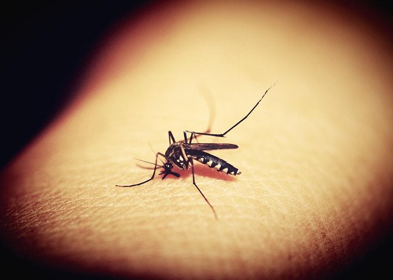 moskit w akcji