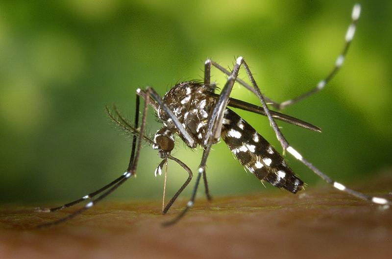 Sposoby na komary 1