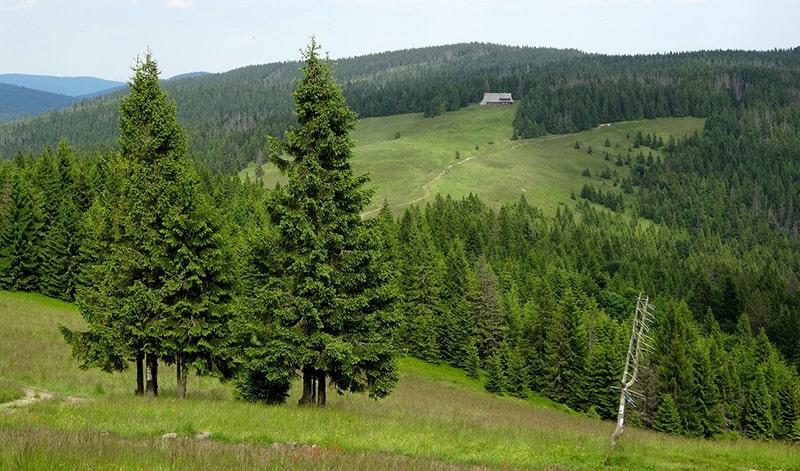 które góry w polsce - karkokosze latem