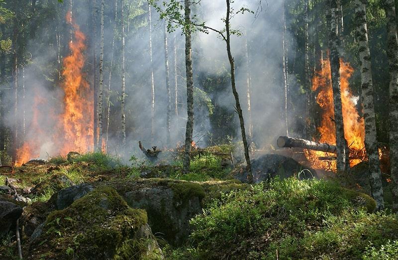 płonie las