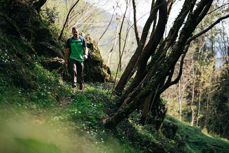 Las w Bursztynowej Górze