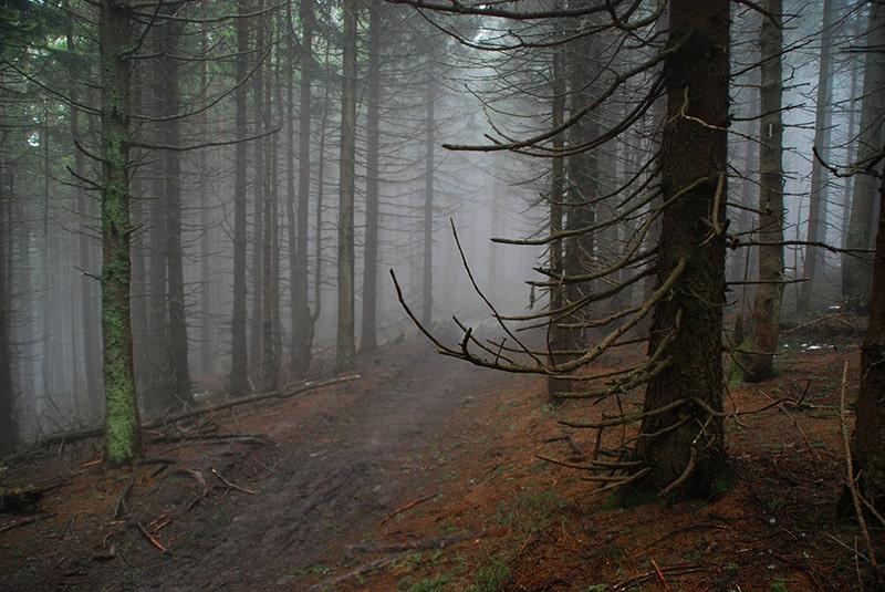 las w beskidzie