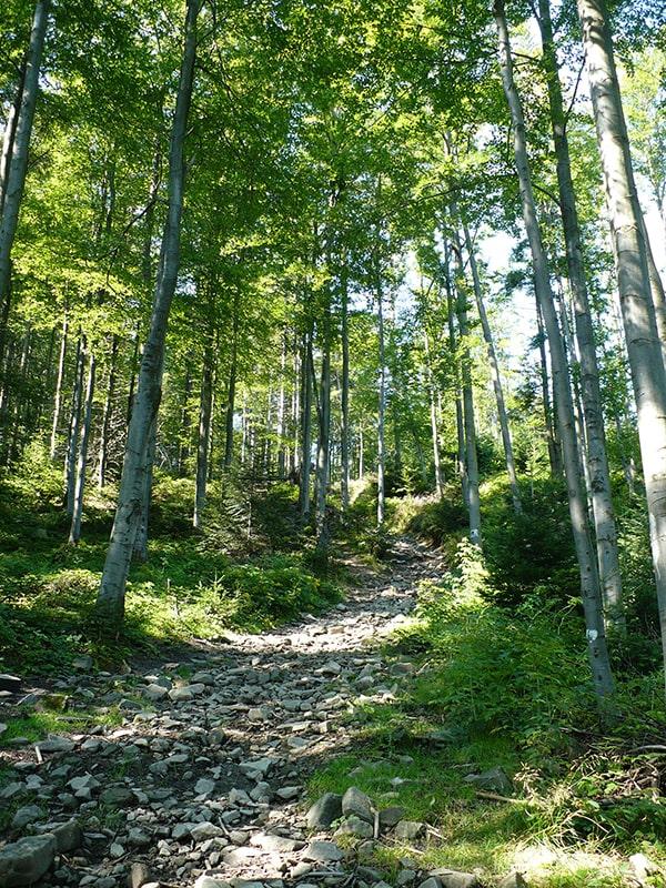 Ostre podejście na szlaku przed Polaną Wyśnikówka (szlak zielony)