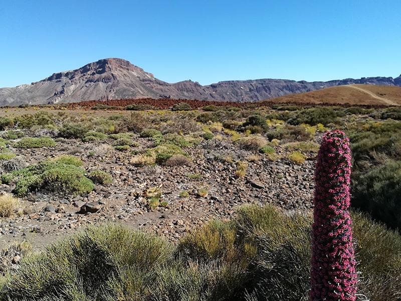 wulkan Teide 2